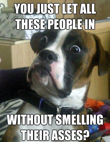 funny-animal-sniff