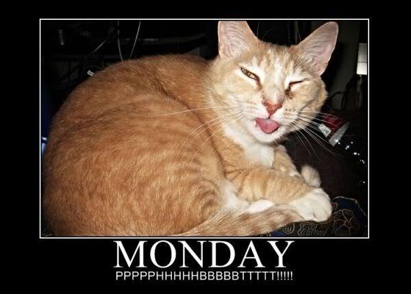 Monday_Cat