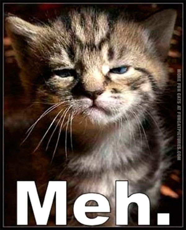 funny-cat-pics-meh