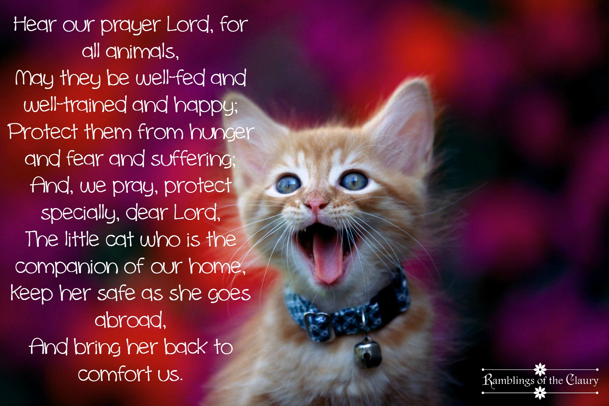 Prayer for All Animals (but especially cats!) | Ramblings ...