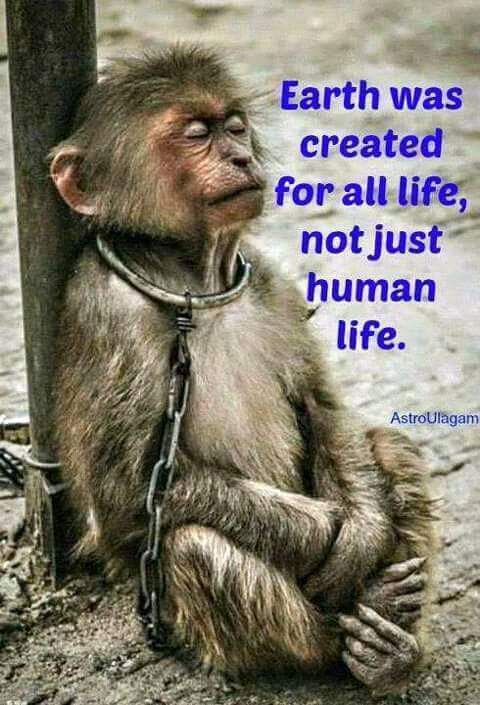 Earth was created for all life, not just human life