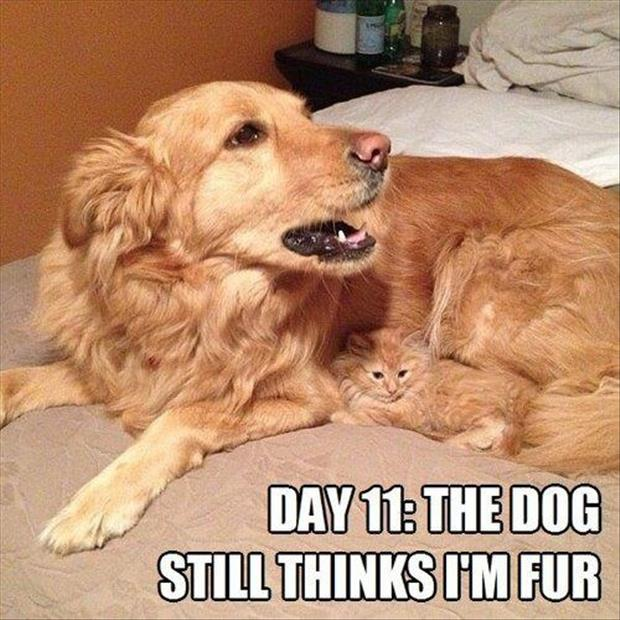 Funny-Animals-with-Captions-18