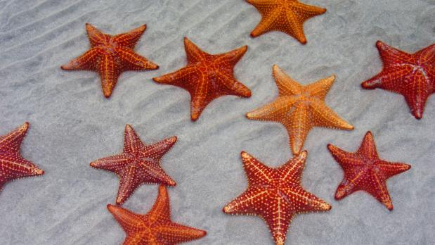 starfish-breathe_43b9abb959c2e572-01