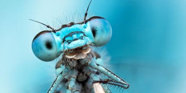 dragonfly-ppcorn