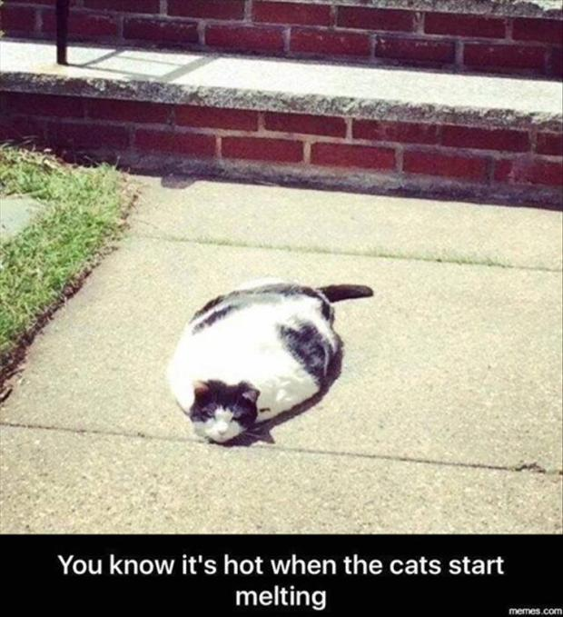 the-cats-are-melting