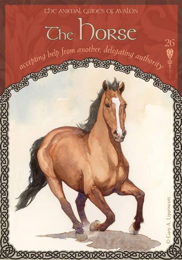 26-horse