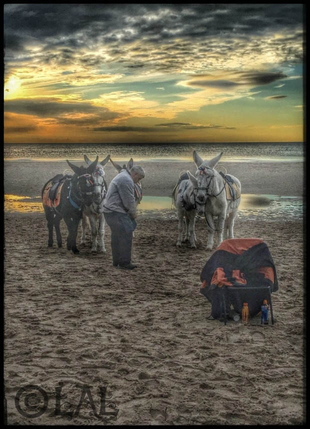 beach-donkeys